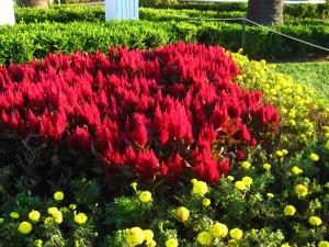 redgreens